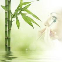 Bambus ZAO